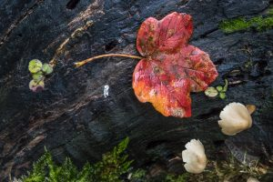 Plitvice Lakes leaf and mushroom detail